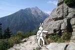 tatry-img_2668_edited-1-rabbit-resting