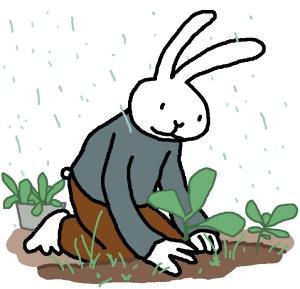 Rabbit-CabbageTransplants-www.MarekBennett.com
